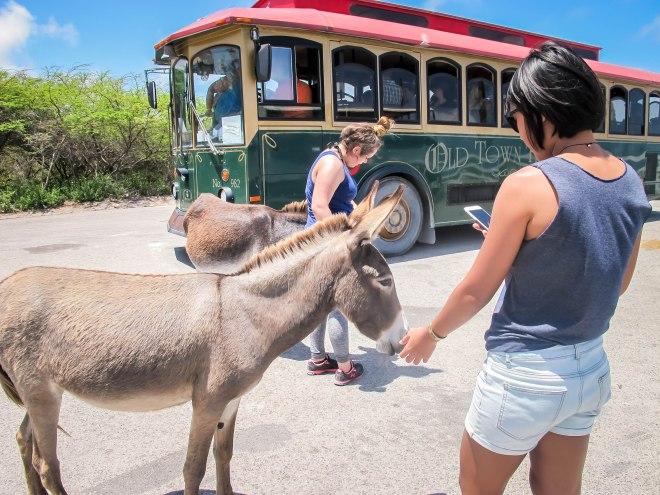 Feeding Donkey Excursion of Carnival Cruise