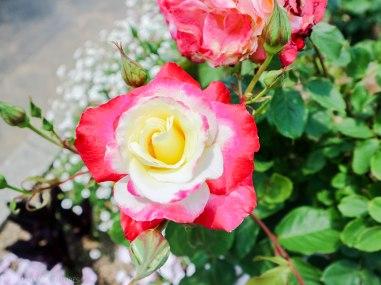 Hamamatsu Flower Park