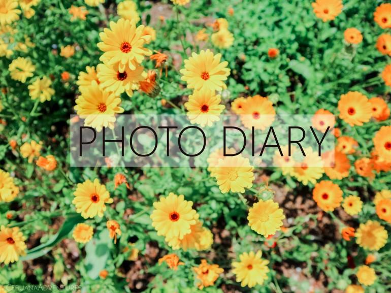 Category Photo Diary on Cebuana Adventures Website