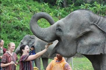 Elephant-Sanctuaries-to-visit-in-Thailand