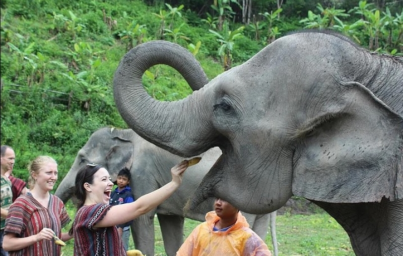 Elephant-Sanctuaries-to-visit-in-Thailand