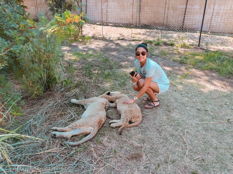 Lion-And-Safari-Park-Lion-Cub-Encounter