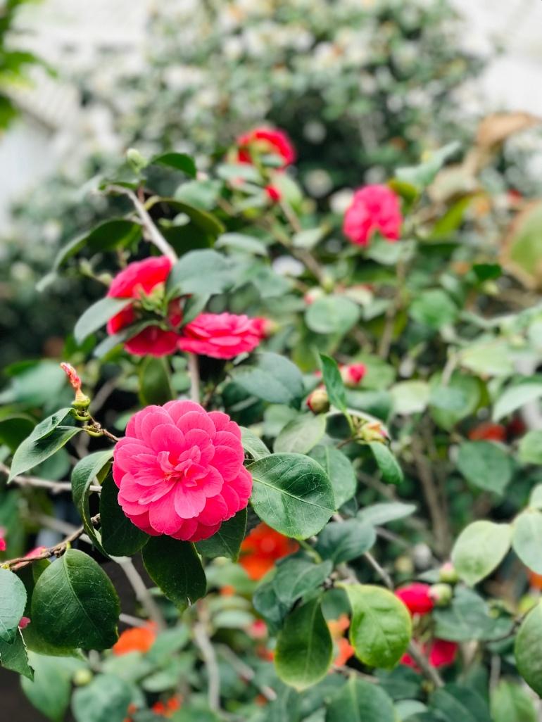 horticultural-garden-gothenburg